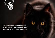 gato_virbac